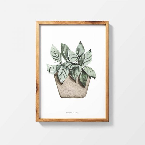 Lámina Green - Ilustración Planta