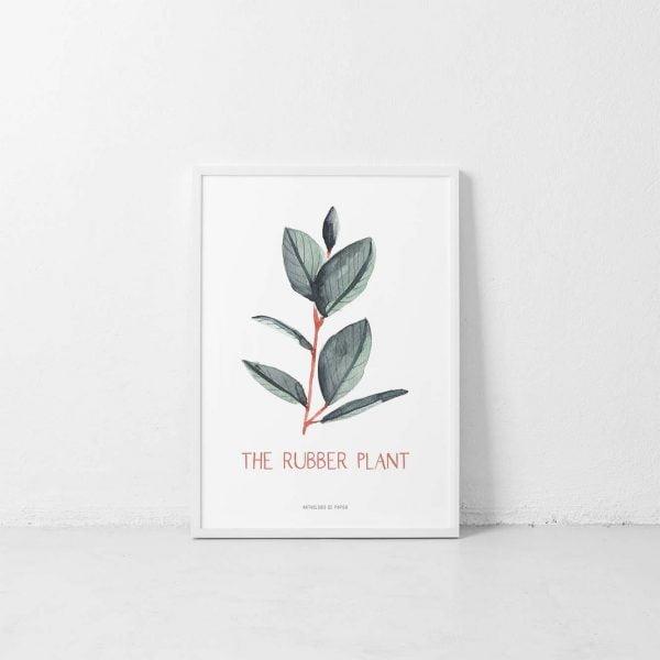 Lámina Rubber Plant - Ilustración