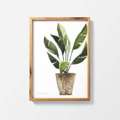 Lámina Palmier - Ilustración Planta tropical
