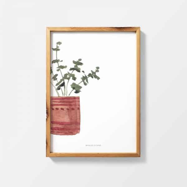 Lámina Plante Rouge - Ilustración Plantas